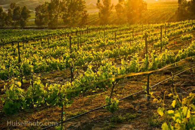 wineries1d