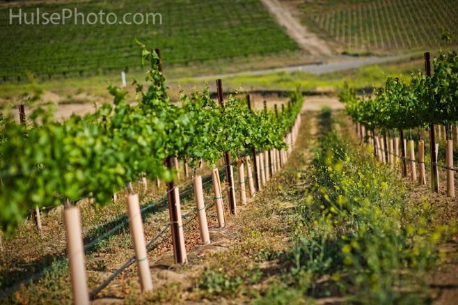 wineries1e